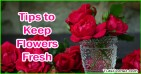 Five Tips to Keep Flowers Fresh and Long Lasting