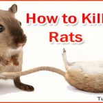 How to Kill Rats – Ways to Get Rid of Rats and Mice in House