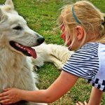 Top 5 Reasons To Have A Pet At Home